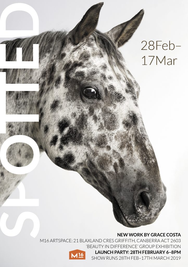exhibition by Grace Costa, horse exhibition