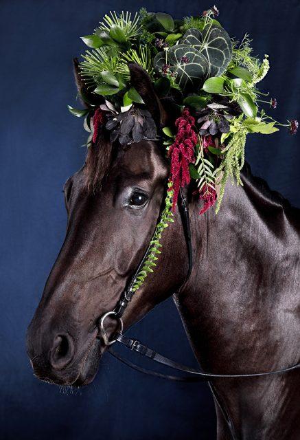 horse art, equine art